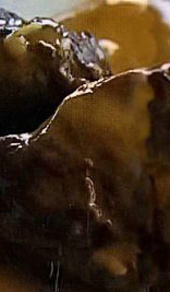 Estouffade de joues de porc au miel et aux agrumes